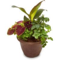 N/A - Ornamentals Edibles Outdoor Planter - Assorted, 1 Each
