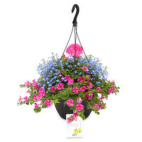 N/A - Bombay Mixed Hanging Basket, 1 Each