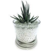 Zebra - in Decorative Glass, 1 Each