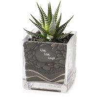 Tropical Succelent Tropical Succelent - Plant Mix in Square Glass w/ Sand Art, 1 Each