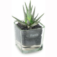 Succulent Succulent - Glass with Message Tag, 1 Each