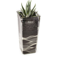Cacti - Succulent Mix In Tapered Glass, 1 Each
