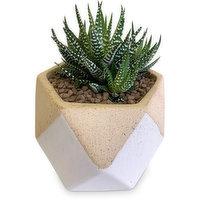 Horty Girl Horty Girl - Succulent in Ceramic Geometric Pot, 1 Each