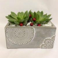 Horty Girl - Cement Pot Succulent, 1 Each