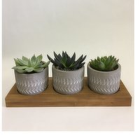 Horty Girl - Succulents In Cement Or Ceramic On Wood Base 2In, 1 Each