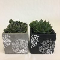 Horty Girl - Cement Square Decor Pot with Succulent, 1 Each