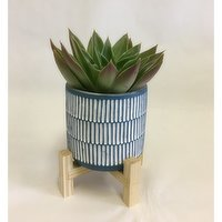 Horty Girl - Blue n White Cement Pot n Wood Stand w Succulent or Tropical 4In, 1 Each