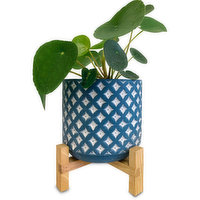 Horty Girl - Blue and White Cement Pot on Wood Stand w Succulent or Tropical 5In, 1 Each