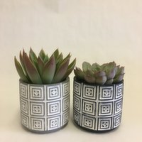 Horty Girl - Cement Round Decor Pot with Succulent 4IN, 1 Each
