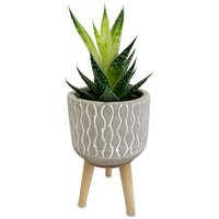 Horty Girl Horty Girl - Cement Pattern Pot on Wood Legs with Succulent, 1 Each