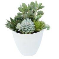 Assorted Assorted - Succulent Planter - 30cm, 1 Each