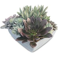 Assorted Assorted - Succulents Planter, 1 Each