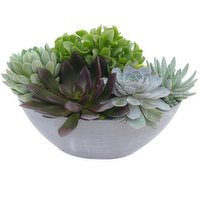 Assorted - Succulents Boval, 1 Each