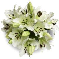 Premium Premium - Oriental Lily 5 Stem, 1 Each