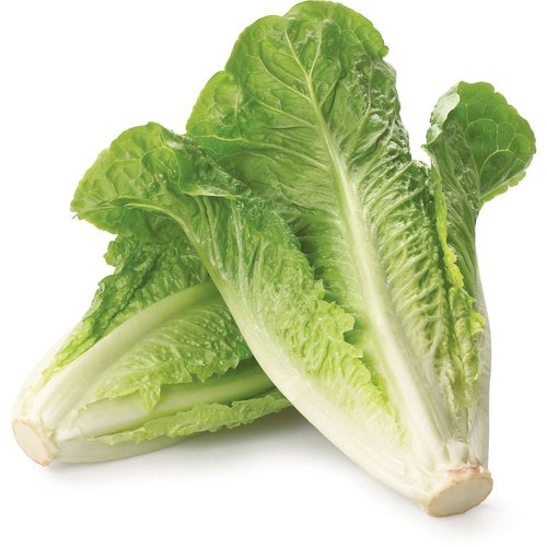 A Classic Lettuce of Choice for Caesar Salads. Rich in Vitamins, Minerals, Phytonutrients and Fibre.