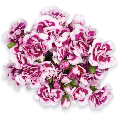 Bouquet of 10 Mini Carnations. Vase not Included for Display Purpose Only.