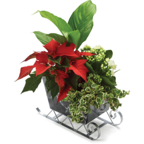 Mix of seasonal flowering & tropical plants. Available seasonally while quantities last.
