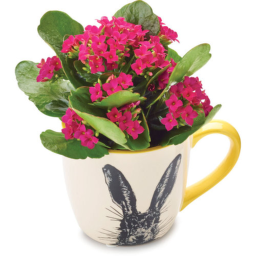 With assorted color Kalanchoe.