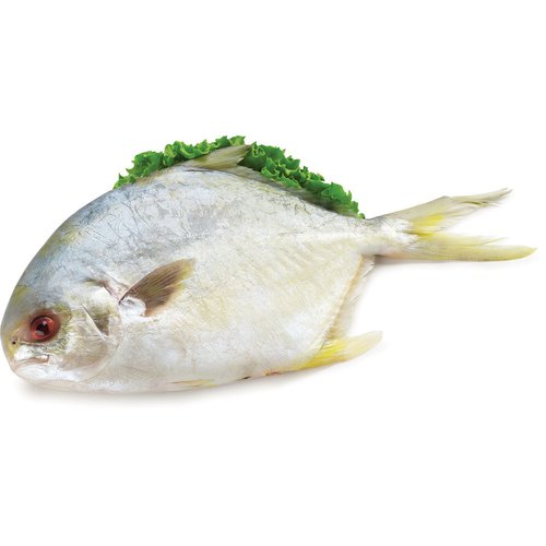 The major benefits of pompano fish include its effects on cholesterol, cognition and bone strength.