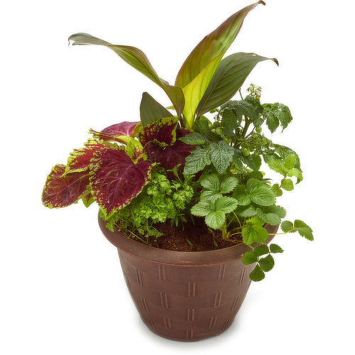 This patio planter has ornamental flowering plants - grow your own herbs & strawberry plants.