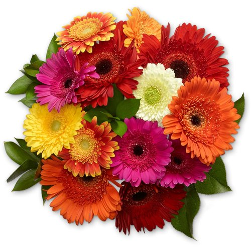 Available While Quantities Last. A Combo of Mini, Standard and Pomponi Gerbera's.