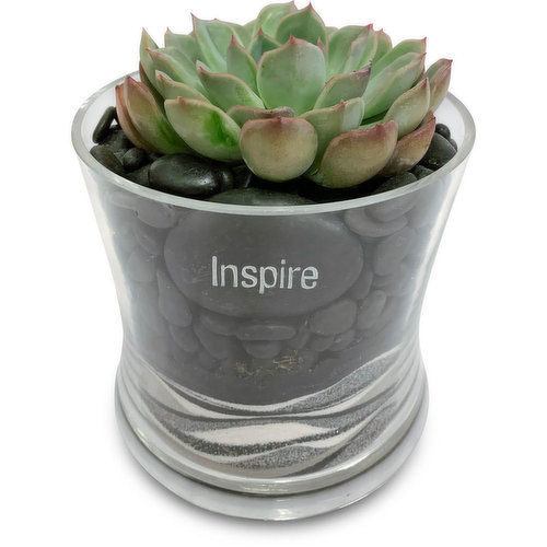 Great accent to any decor, on a window sill, desk or side table.
