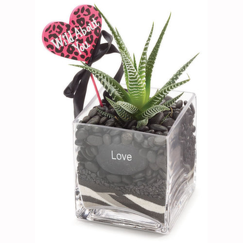 """Message of """"love"""" large porosity of  rocks, which means they are able to hold a large amount of oxygen.The plant is able to thrive without soil because of a perfect balance of air & water."""
