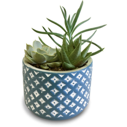Included plant will be a Succulent or Tropical.