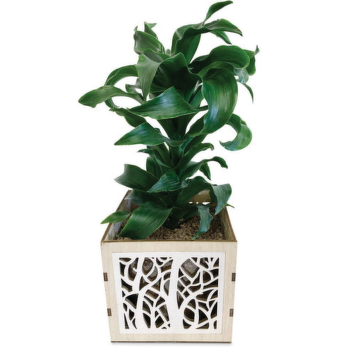 Great for a side table, patio table or as a gift