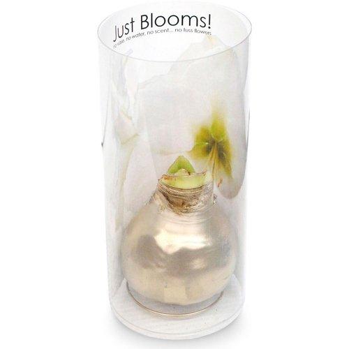 No vase, no water, no scent... no fuss flowers. Just Blooms!