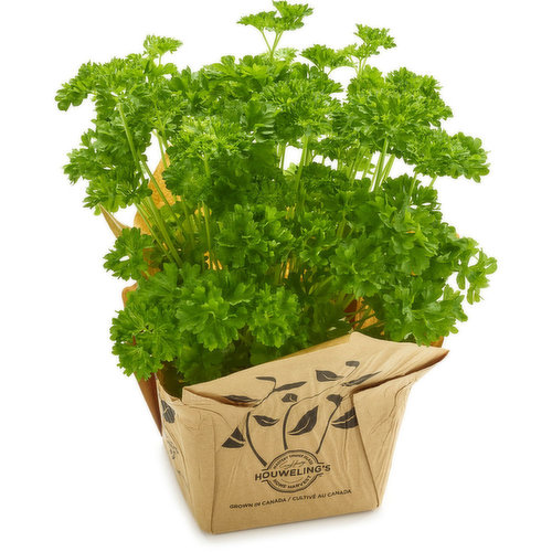 Grow your own Parsley in your garden or in a window.