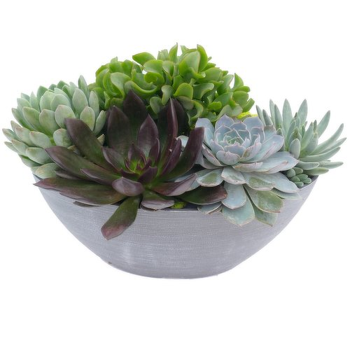 """Decorate your patio with these beautiful Succulents<table border=""""0"""" cellpadding=""""0"""" cellspacing=""""0"""" width=""""682""""><tbody><tr><td height=""""20""""></td></tr></tbody><colgroup><col></colgroup></table>"""
