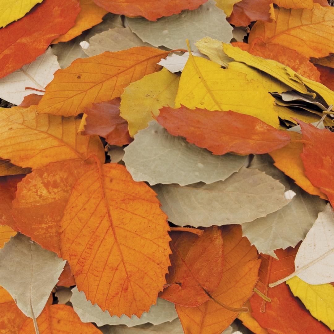 Natural Leaves (90pcs)