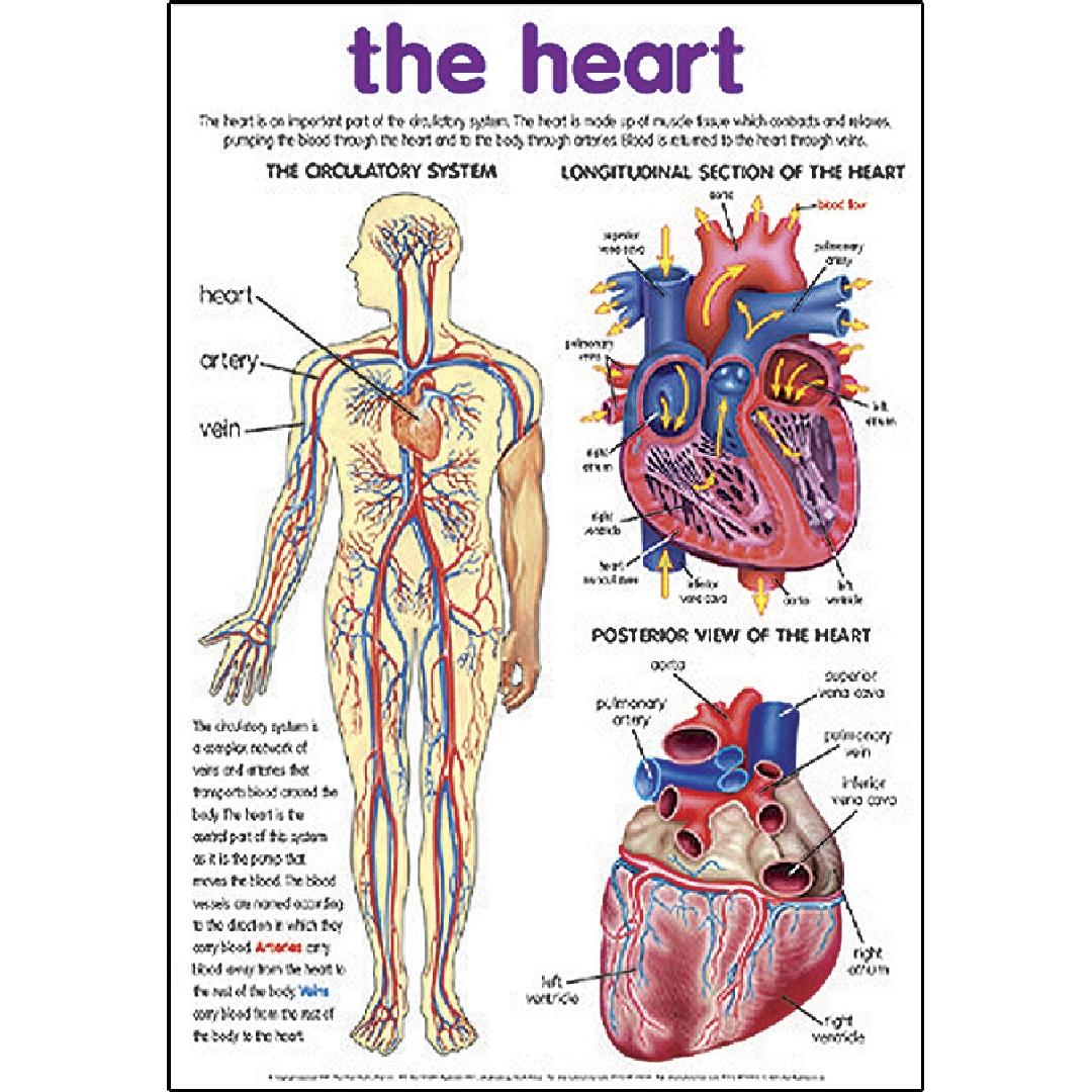 The Heart Poster
