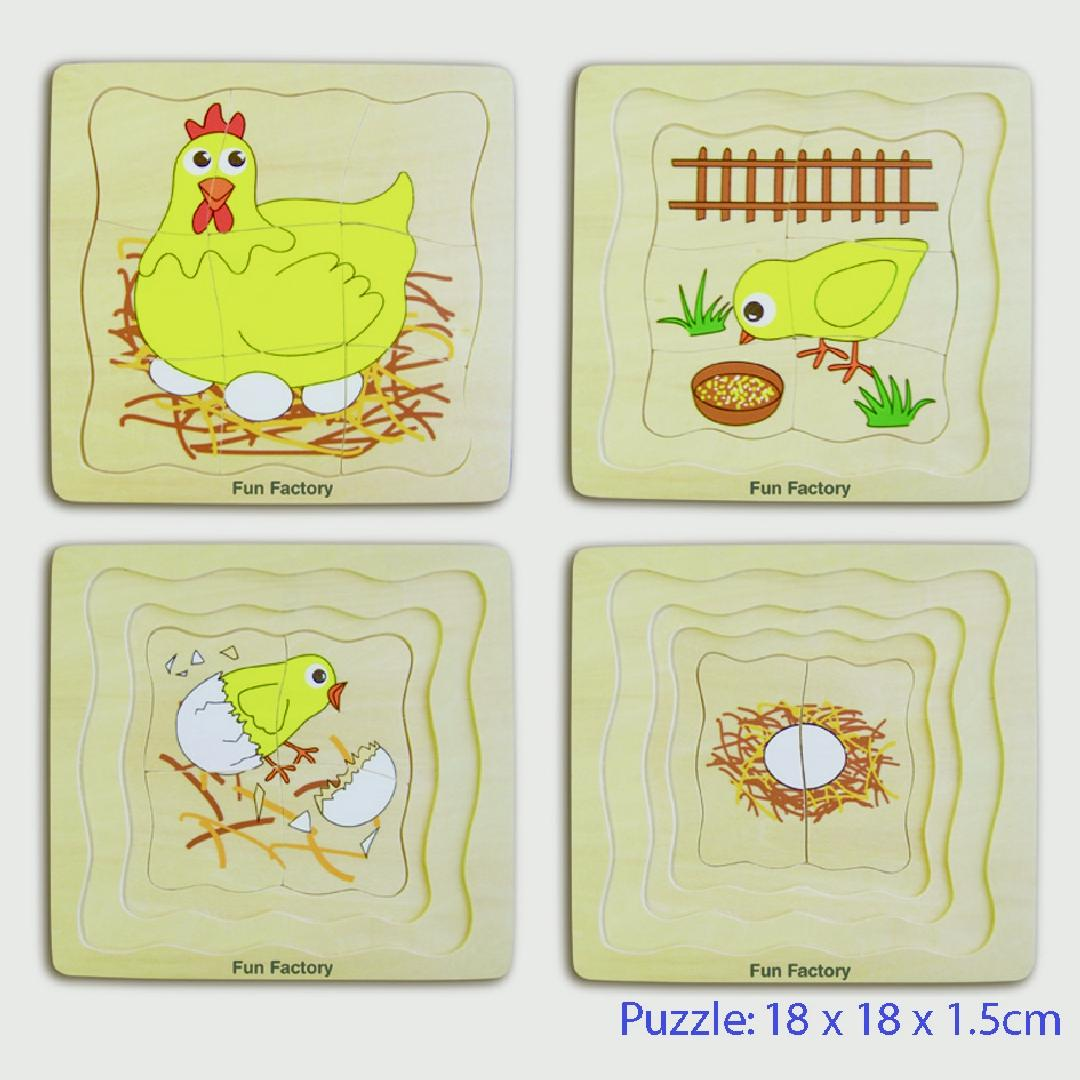 Lifecycle of a Chicken Puzzle