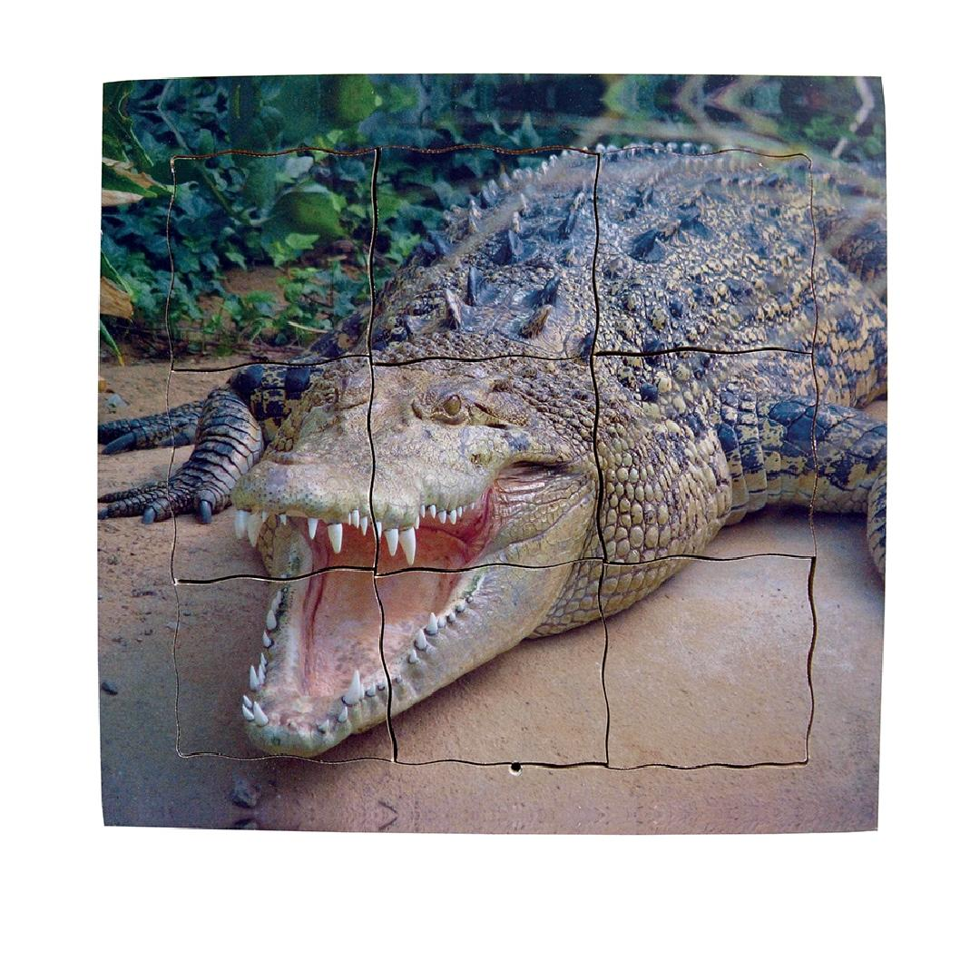 Crocodile Life Cycle Layered Tray Puzzle