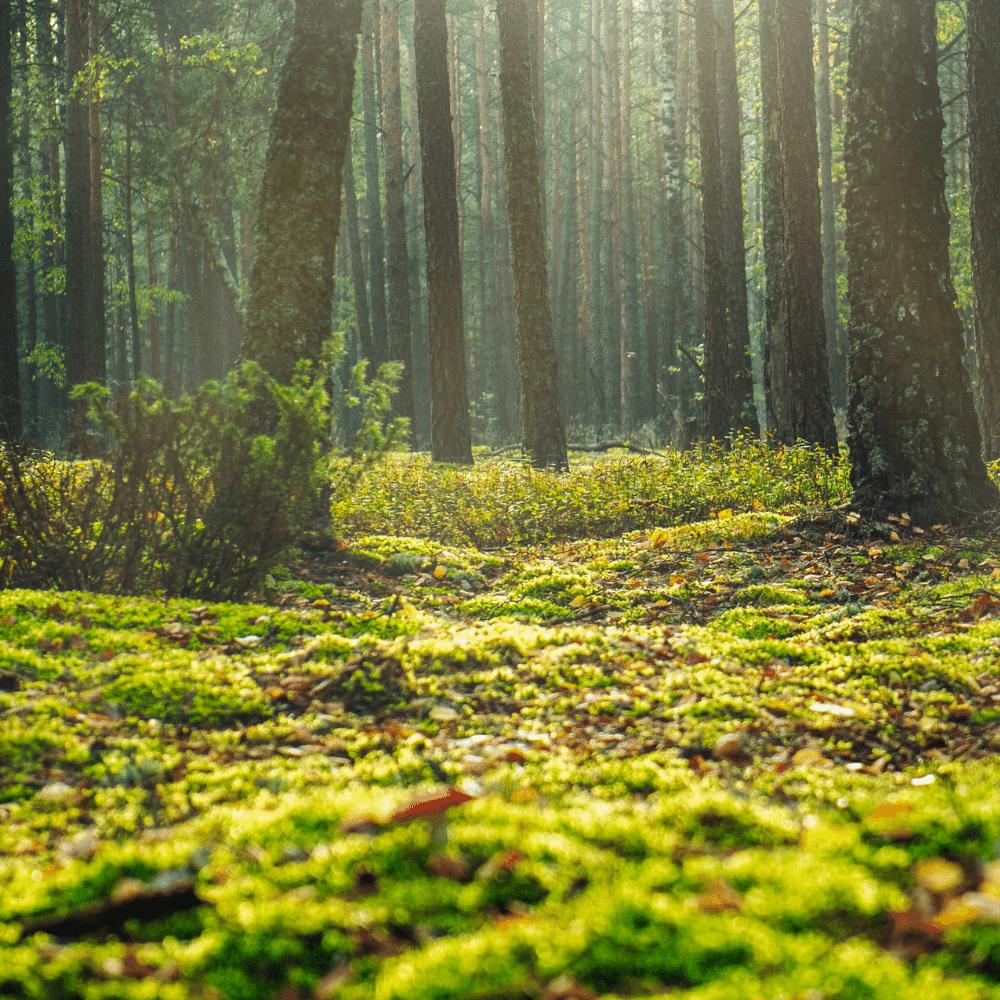 likenwood-wood-for-life-ekohunters