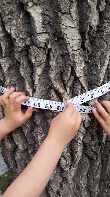 Outdoor Activity for Kids - Measure the circumference of a tree to get its age