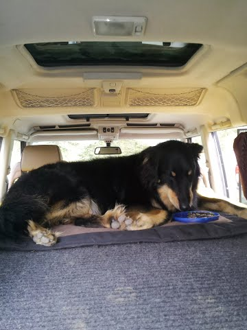 Land Rover bed being enjoyed by pup