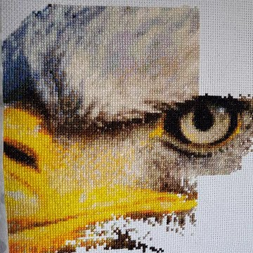 Eagle Cross-Stitch Work In Progress