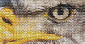 Eagle Cross-Stitch Mockup