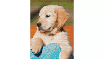 Example Mockup - Golden Retriever Puppy