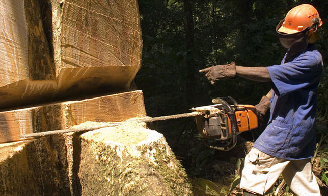 Government condemns Global Witness's desire to discredit Congolese forest products