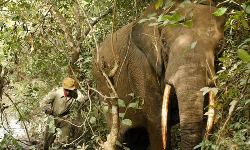 Des touristes enlevés en RDC?