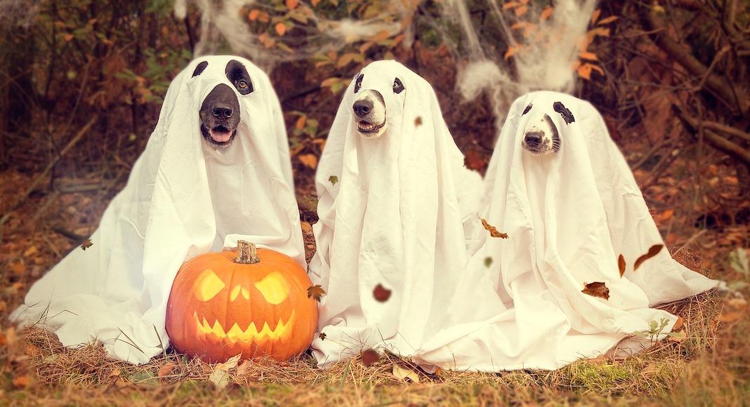 halloween à miami
