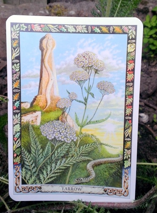 Druid Plant Oracle - Yarrow