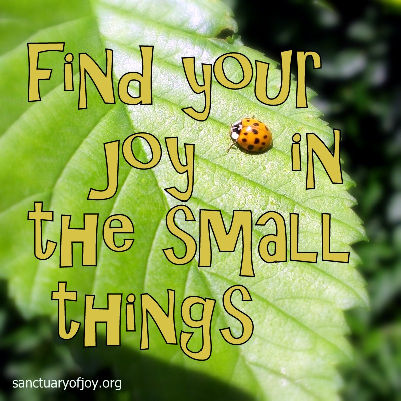 Find your joy in the small things