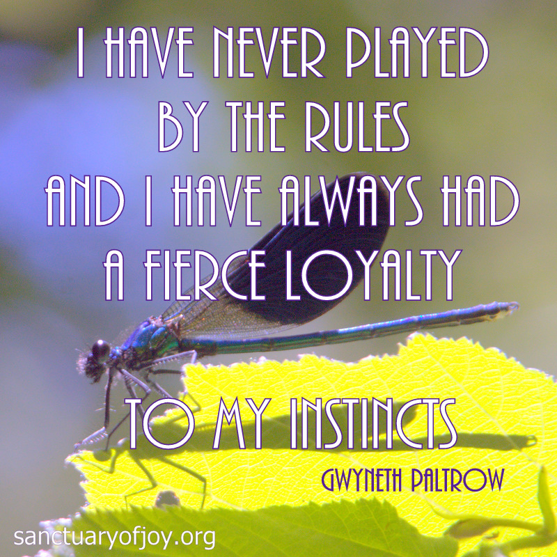 I have never played by the rules and I have always had a fierce loyalty to my instincts
