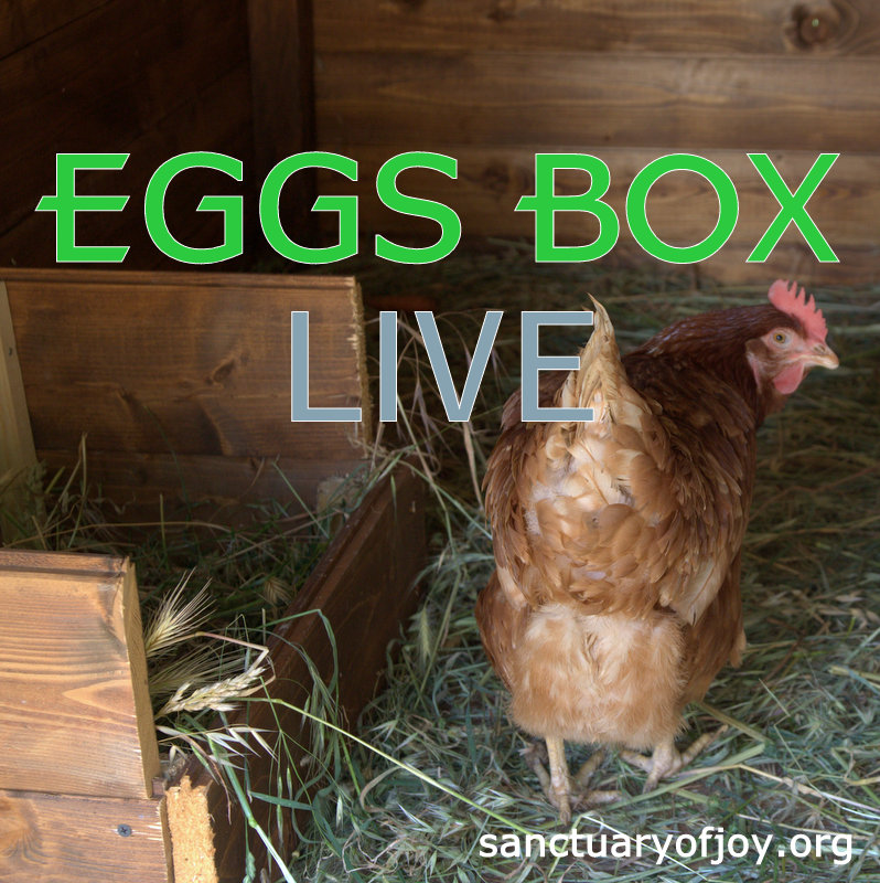 EGGSBOX LIVE