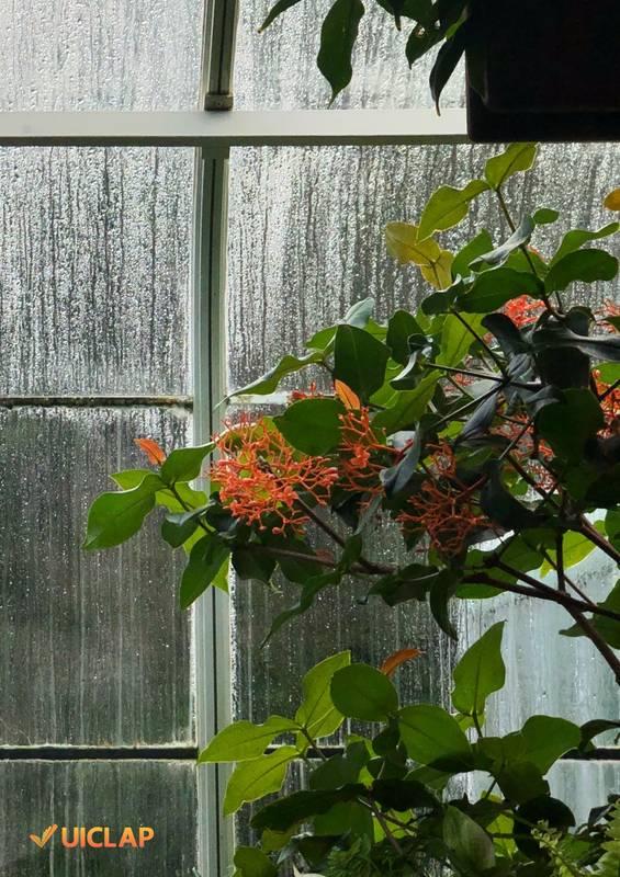 30 poemas para ler na chuva